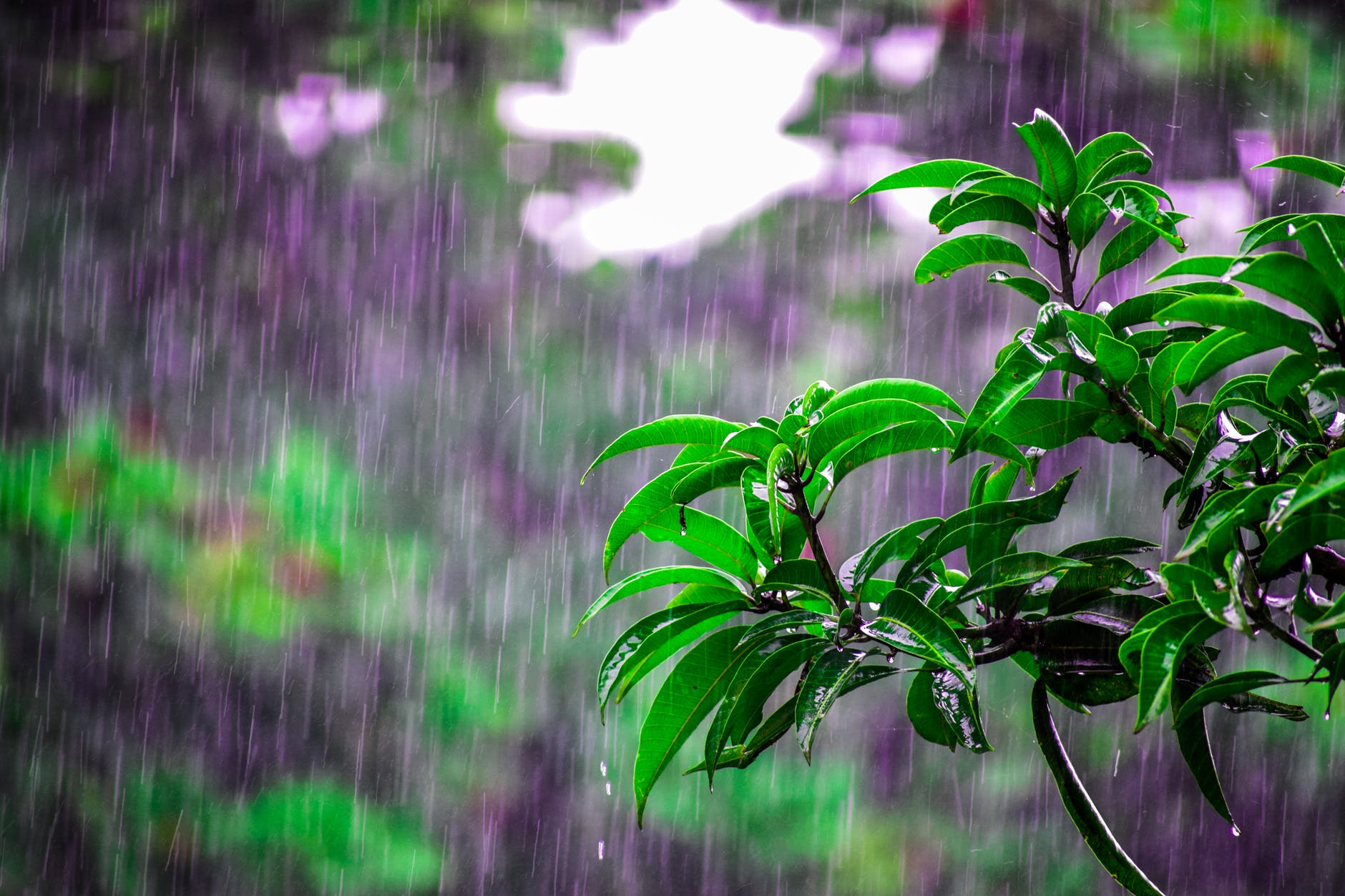 tips to stay fit in rains