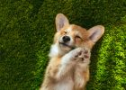 7 Amazing Dog Breeds to Consider Getting Your Family