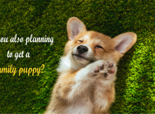 planning for a family puppy