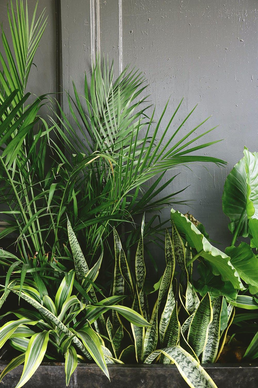 plants oxygen