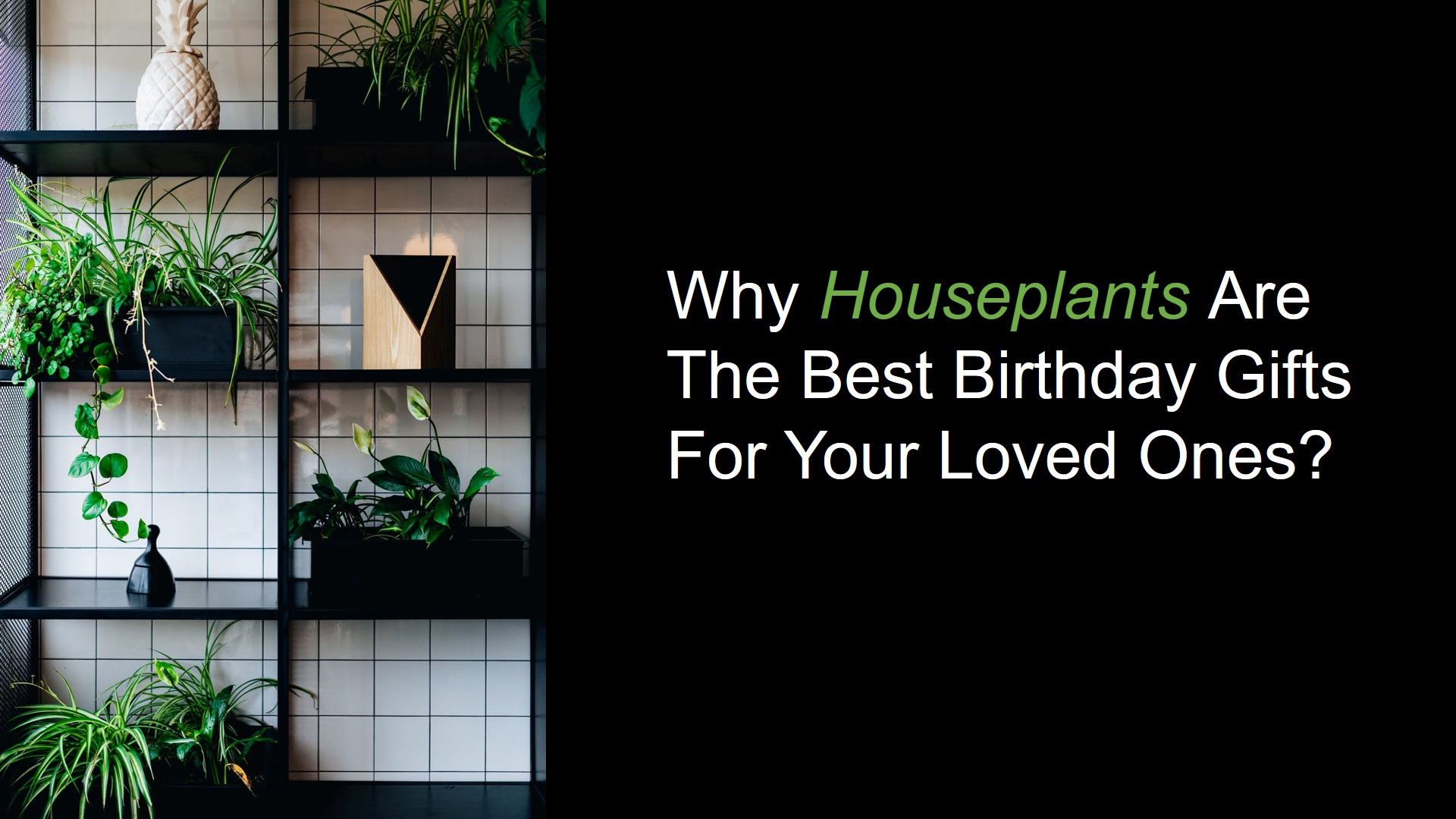 Why houseplants