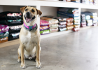 Pet Food Stores